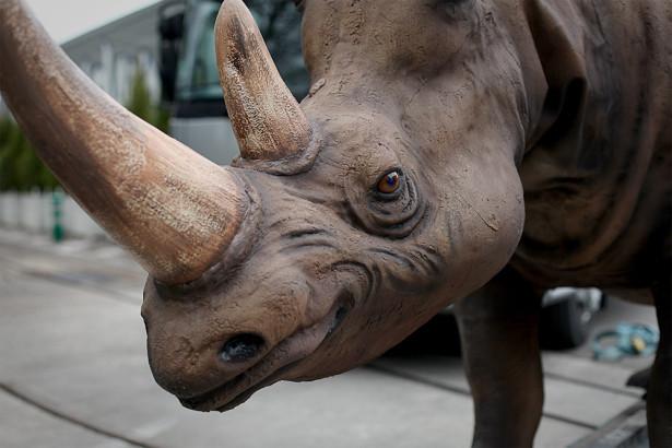 Rhino_Creepy