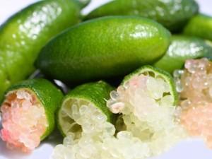 [Découverte botanique] Le citron caviar