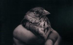[Critique Roman] L'innocence – Brian Deleeuw