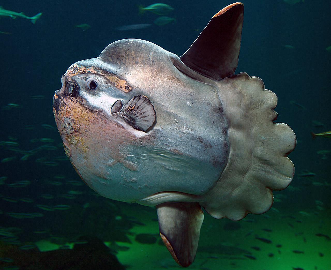 [Vie de Gamer] Survive! Mola Mola!