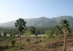 [Coup de Pouce] HAITI CAP 500 000 Arbres , «Réforestons» Haïti