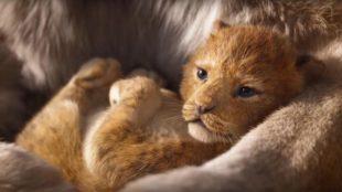 [Vie de Ciné] Le Roi Lion, trop réaliste ?