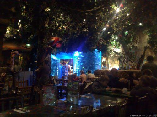 rainforest_04.jpg